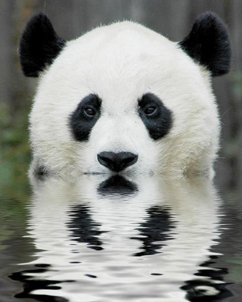 panda-nadeshiko220100423192044